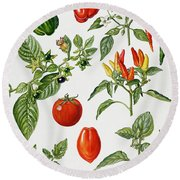 Tomatoes And Related Vegetables Round Beach Towel by Elizabeth Rice