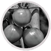 Tomatoes On The Vine Bw Round Beach Towel