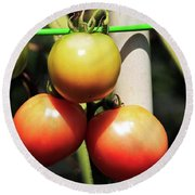 Tomatoes Ripening On The Vine Round Beach Towel