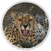 Tongue And Cheek Cheetah Round Beach Towel