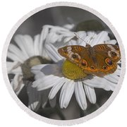 Topsail Butterfly Round Beach Towel