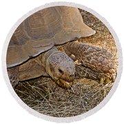 Tortoise Eating Lunch In Living Desert Zoo And Gardens In Palm Desert-california  Round Beach Towel