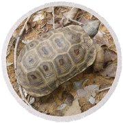 Tortoise  Round Beach Towel