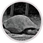 Tortoise Relaxing Round Beach Towel