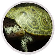 Turtle With A Tale To Tell Round Beach Towel