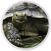Tortoise's Stare Round Beach Towel