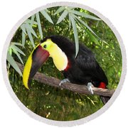 Toucan Round Beach Towel
