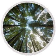 Towering Fir Trees In Oregon Forest State Park Round Beach Towel