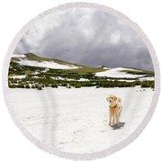 Traildog At Kingston Peak Snow Field Round Beach Towel