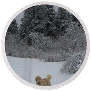 Traildog Loving The Winter Scene In The Flatirons Round Beach Towel