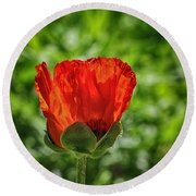 Translucent Poppy Round Beach Towel