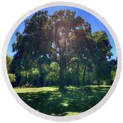 Tree Bathed In Sun Round Beach Towel