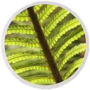Tree Fern Frond Round Beach Towel