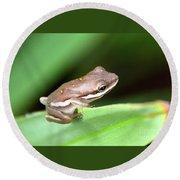 Tree Frog Close-up 01110 Round Beach Towel