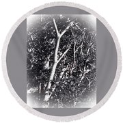 Tree In Summer In Black And White Round Beach Towel