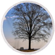 Tree In The Morning Light Round Beach Towel