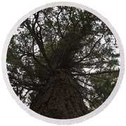 Tree In The Round Round Beach Towel
