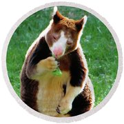 Tree Kangaroo Round Beach Towel