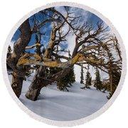 Tree Life In Winter Round Beach Towel