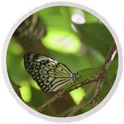 Tree Nymph Butterfly Sitting On A Tree Branch Round Beach Towel