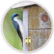 Tree Swallow At Nesting Box Round Beach Towel