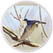 Tree Swallow In Flight Round Beach Towel