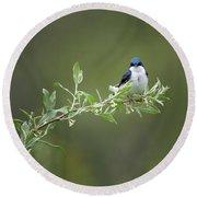 Tree Swallow Male Round Beach Towel