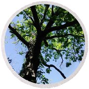 Tree Top Round Beach Towel