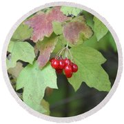 Tree With Red Berry Round Beach Towel