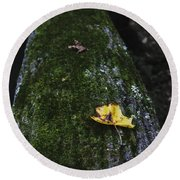 Tree With Yellow Leaf Round Beach Towel