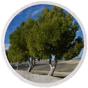 Trees In January Round Beach Towel