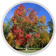 Tree's In The Forest 4 Round Beach Towel