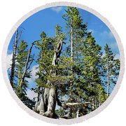 Trees On The Edge 1 Round Beach Towel