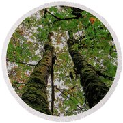 Trees Upward View Round Beach Towel