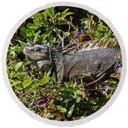 Treetop Iguana Round Beach Towel