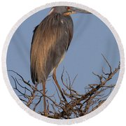 Tri Color Heron Round Beach Towel