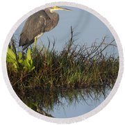 Tri-colored Heron And Reflection Round Beach Towel