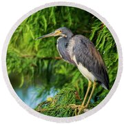 Tri-colored Heron At Sunset  Round Beach Towel