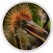 Tri Colored Heron Chick Round Beach Towel