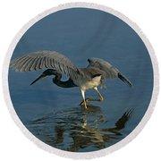 Tri Colored Heron Fishing Round Beach Towel