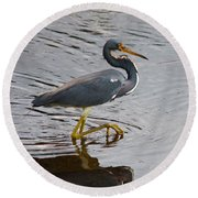 Tri-colored Heron Wading In The Marsh Round Beach Towel