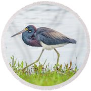 Tricolor Heron Round Beach Towel