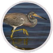 Tricolored Heron 1 Round Beach Towel