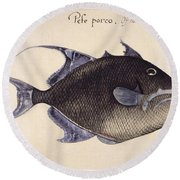 Trigger-fish, 1585 Round Beach Towel