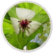 Trillium Wildflower Round Beach Towel
