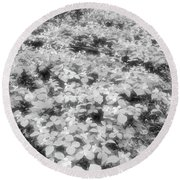 Trilliums On The Forest Floor Bw Round Beach Towel