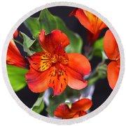 Trio Of Alstroemeria Inca Flowers-4 Round Beach Towel
