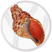 Triton Shell On White Vertical Round Beach Towel