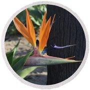 Tropical Garden Photo Of A Bird Of Paradise  Round Beach Towel