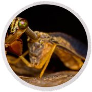 Tropical Mantispid Round Beach Towel